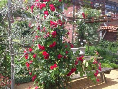 Diverse tuinen