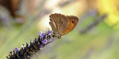 082013_biodiversiteit3