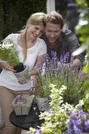 tuinplant_vd_maand_april_lavendel_sfeer