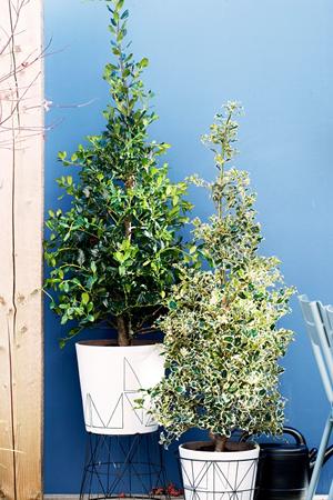 tuinplant_vd_maand_november_5